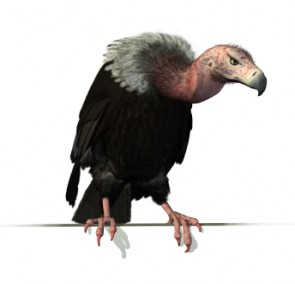 Vulture Perched on an Edge